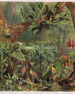 Antique chromolithograph of Tropical Plants
