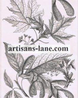 Maple Tree antique botanical print
