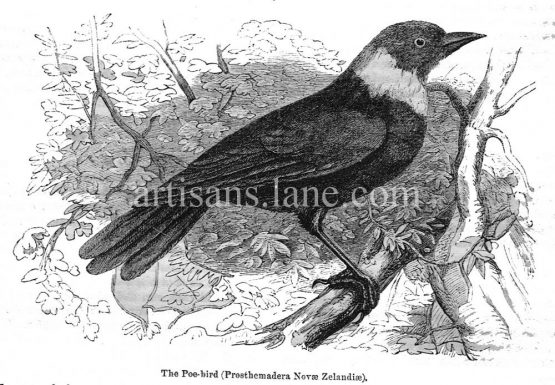 Poe Bird antique illustration graphic engraving