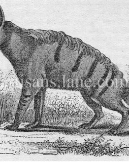 The Aard Wolf, Antique ,wood illustration ,1860 print