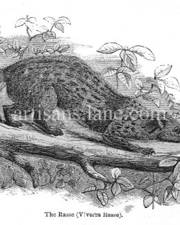 The Rasse Antique print wood engraved illustration