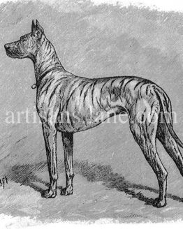 German Brindle female hound Antique original drawing